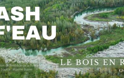 Flash Inf'EAU – Le bois en rivière