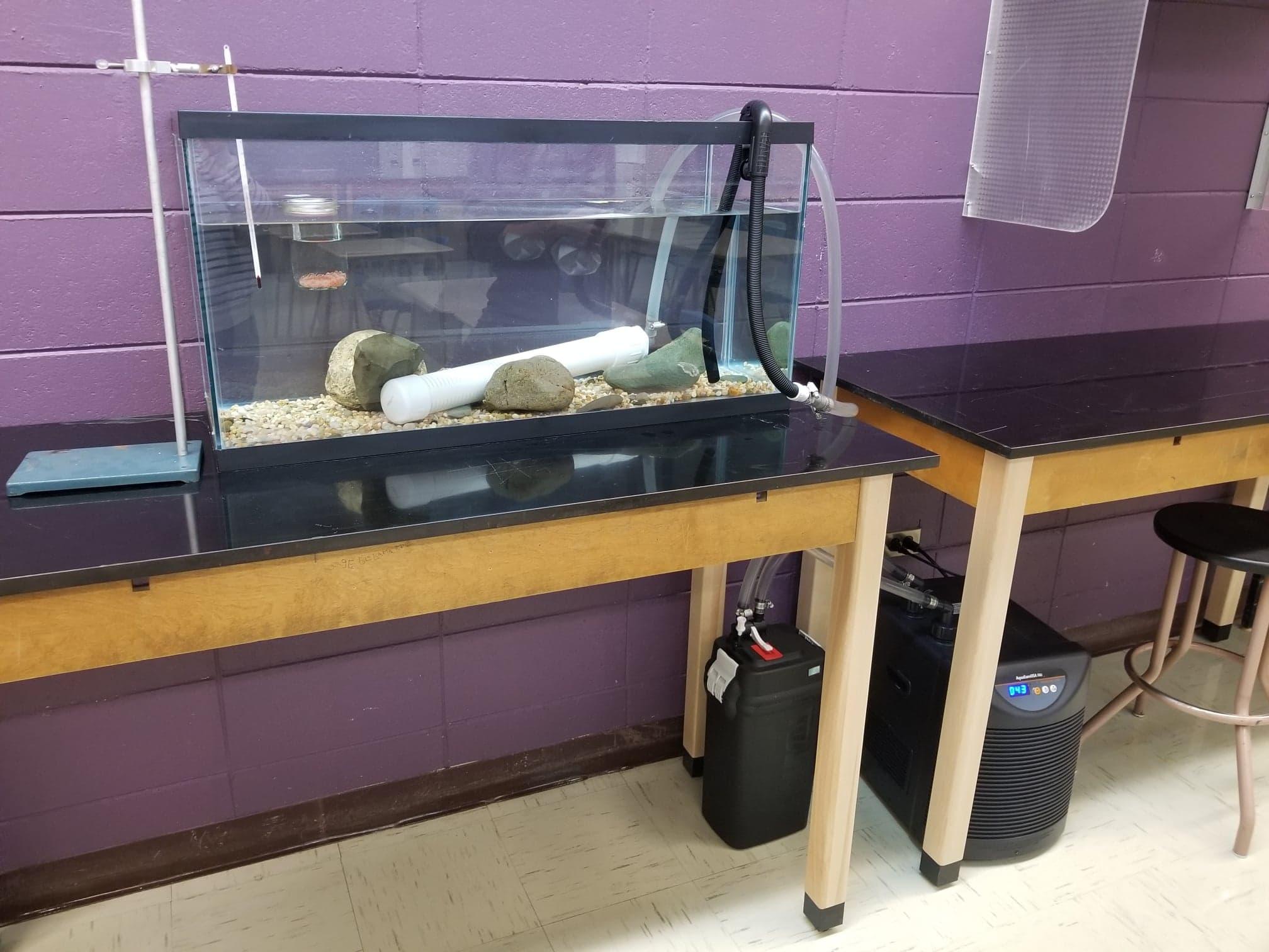 L'aquarium de l'école de l'Escabelle (Cap-Chat)