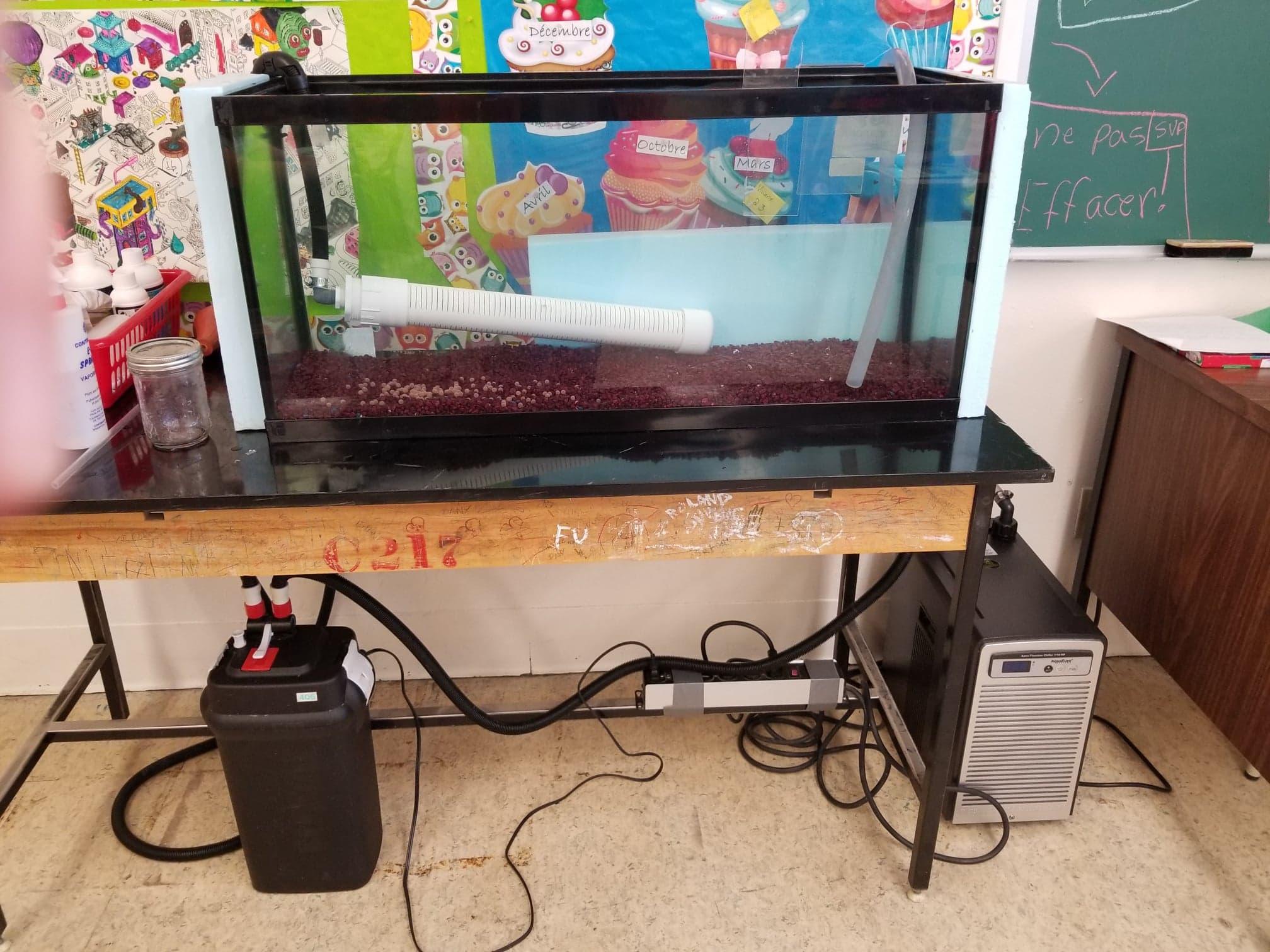 Aquarium de l'école Gabriel-Le Courtois (Sainte-Anne-des-Monts)